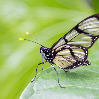Mindo butterfly farms