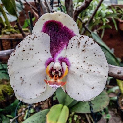 Mindo orchid farms